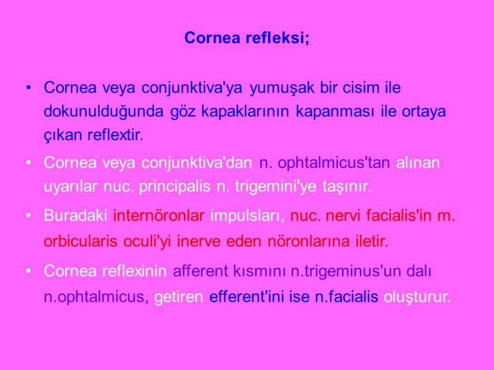 Cornea refleksi; Cornea veya conjunktiva'ya yumuşak bir cisim ile dokunulduğunda göz kapaklarının kapanması ile ortaya çıkan reflextir. Cornea veya co