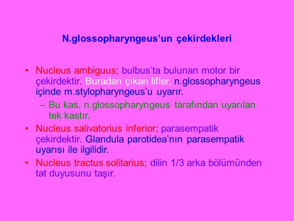 N.glossopharyngeus'un çekirdekleri Nucleus ambiguus; bulbus'ta bulunan motor bir çekirdektir. Buradan çıkan lifler, n.glossopharyngeus içinde m.stylop