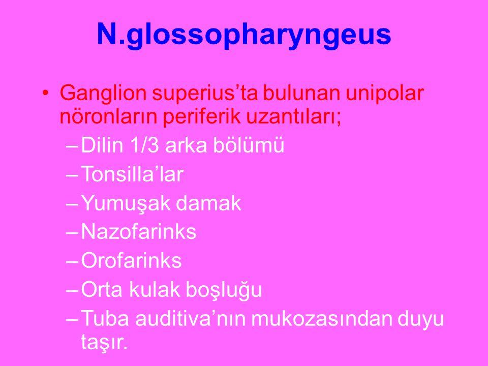 N.glossopharyngeus Ganglion superius'ta bulunan unipolar nöronların periferik uzantıları; –Dilin 1/3 arka bölümü –Tonsilla'lar –Yumuşak damak –Nazofar