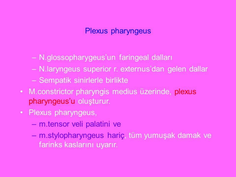 Plexus pharyngeus –N.glossopharygeus'un faringeal dalları –N.laryngeus superior r. externus'dan gelen dallar –Sempatik sinirlerle birlikte M.constrict