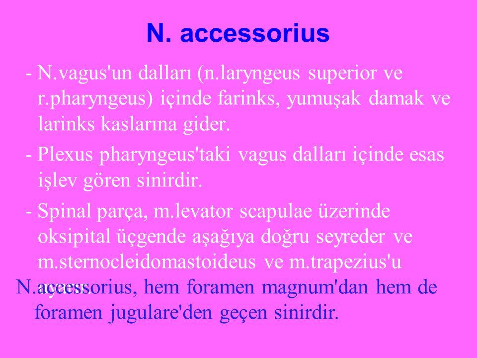 N. accessorius - N.vagus'un dalları (n.laryngeus superior ve r.pharyngeus) içinde farinks, yumuşak damak ve larinks kaslarına gider. - Plexus pharynge