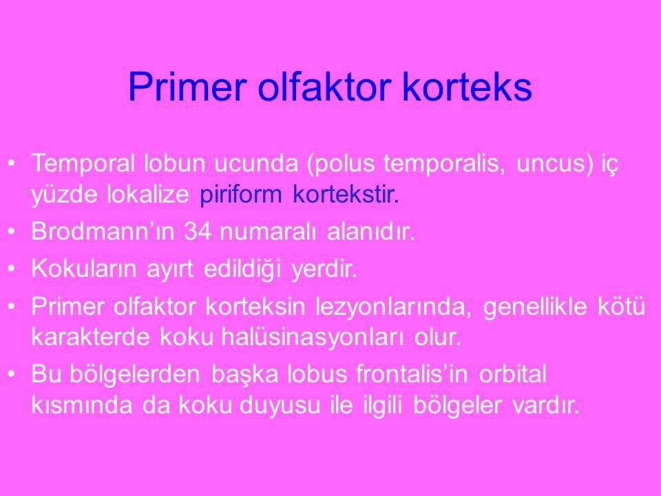 Primer olfaktor korteks Temporal lobun ucunda (polus temporalis, uncus) iç yüzde lokalize piriform kortekstir. Brodmann'ın 34 numaralı alanıdır. Kokul