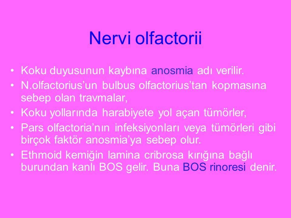 Nervi olfactorii Koku duyusunun kaybına anosmia adı verilir. N.olfactorius'un bulbus olfactorius'tan kopmasına sebep olan travmalar, Koku yollarında h
