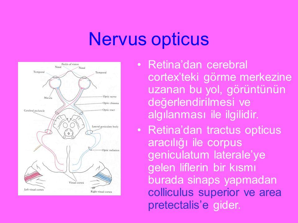 Nervus opticus Retina'dan cerebral cortex'teki görme merkezine uzanan bu yol, görüntünün değerlendirilmesi ve algılanması ile ilgilidir. Retina'dan tr