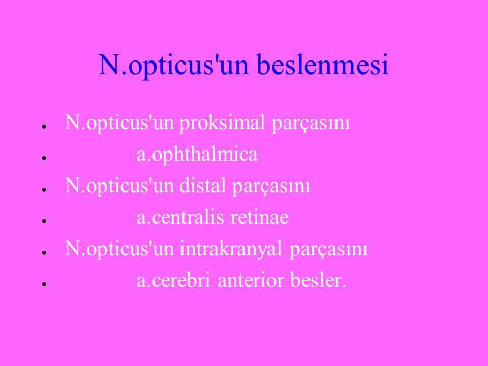 N.opticus'un beslenmesi ● N.opticus'un proksimal parçasını ● a.ophthalmica ● N.opticus'un distal parçasını ● a.centralis retinae ● N.opticus'un intrak