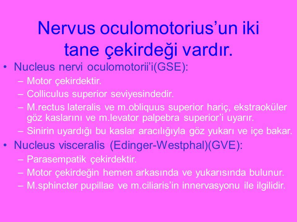 Nervus oculomotorius'un iki tane çekirdeği vardır. Nucleus nervi oculomotorii'i(GSE): –Motor çekirdektir. –Colliculus superior seviyesindedir. –M.rect