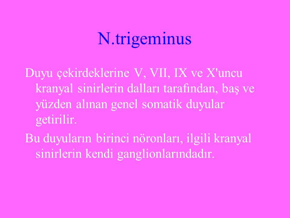 N.trigeminus Duyu çekirdeklerine V, VII, IX ve X'uncu kranyal sinirlerin dalları tarafından, baş ve yüzden alınan genel somatik duyular getirilir. Bu