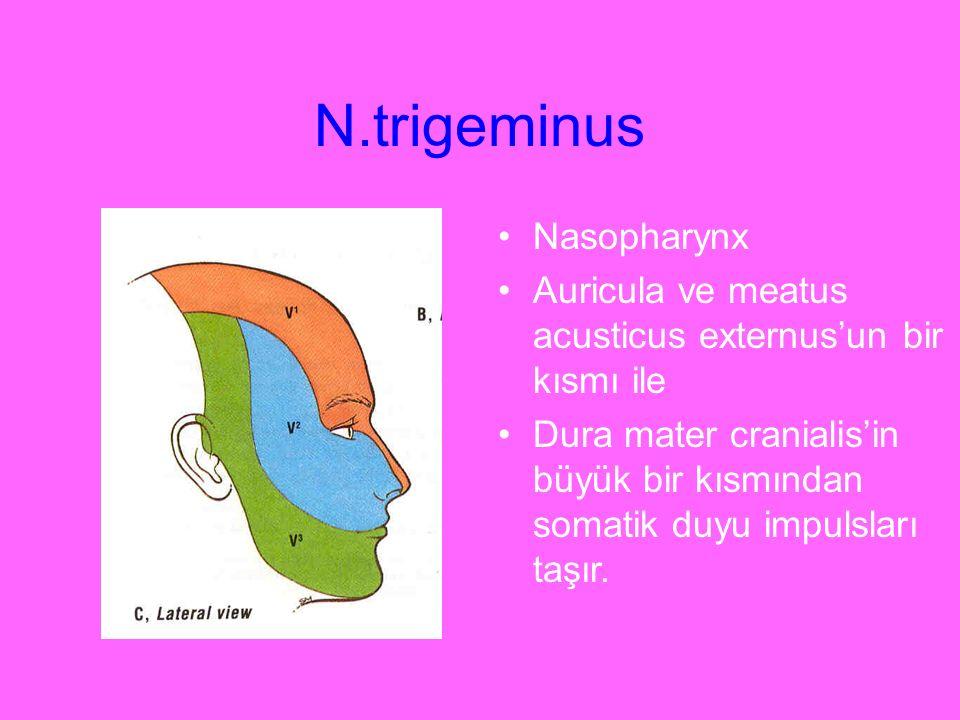 N.trigeminus Nasopharynx Auricula ve meatus acusticus externus'un bir kısmı ile Dura mater cranialis'in büyük bir kısmından somatik duyu impulsları ta