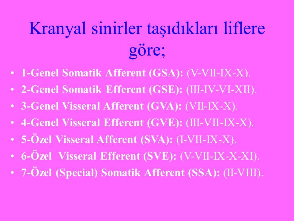 Kranyal sinirler taşıdıkları liflere göre; 1-Genel Somatik Afferent (GSA): (V-VII-IX-X). 2-Genel Somatik Efferent (GSE): (III-IV-VI-XII). 3-Genel Viss