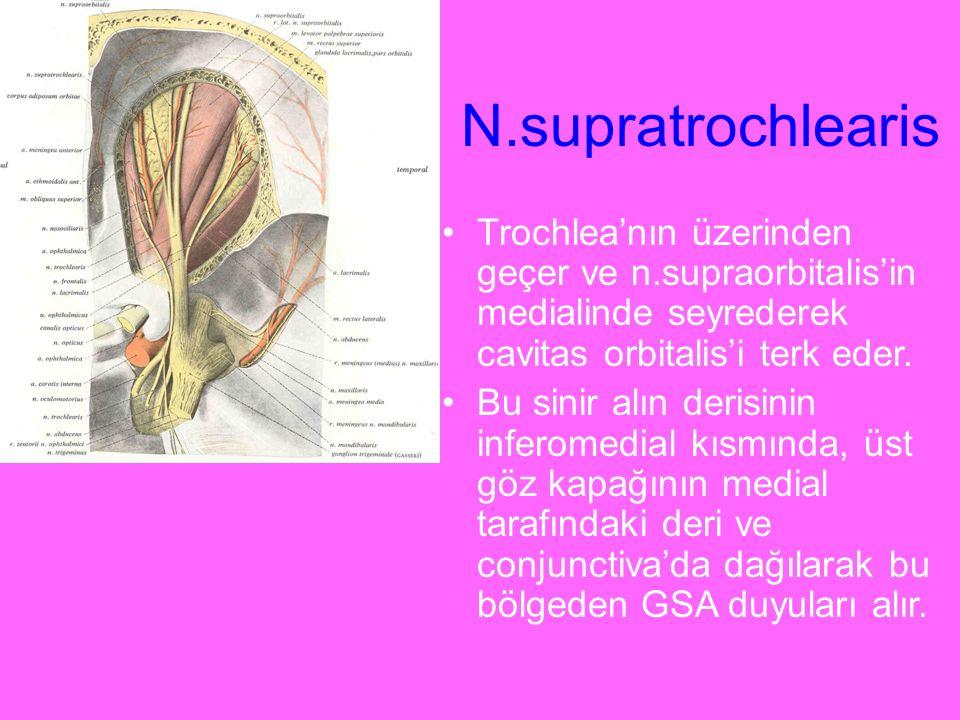 N.supratrochlearis Trochlea'nın üzerinden geçer ve n.supraorbitalis'in medialinde seyrederek cavitas orbitalis'i terk eder. Bu sinir alın derisinin in