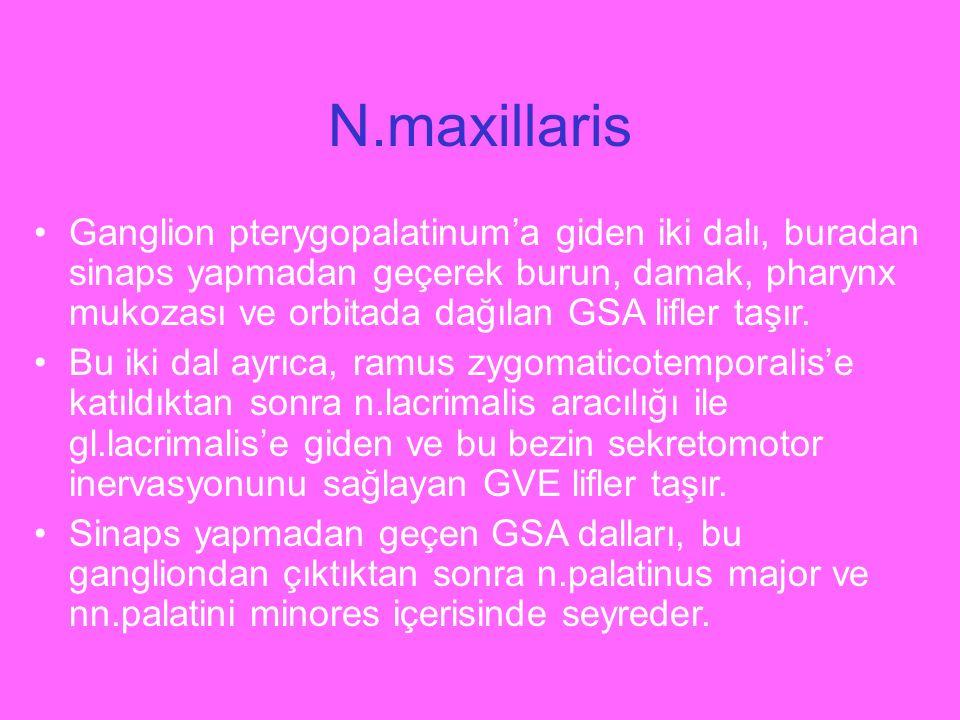 N.maxillaris Ganglion pterygopalatinum'a giden iki dalı, buradan sinaps yapmadan geçerek burun, damak, pharynx mukozası ve orbitada dağılan GSA lifler