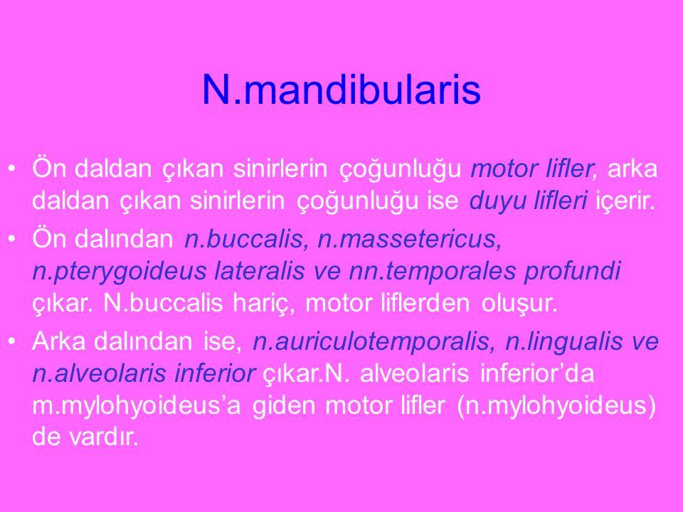N.mandibularis Ön daldan çıkan sinirlerin çoğunluğu motor lifler, arka daldan çıkan sinirlerin çoğunluğu ise duyu lifleri içerir. Ön dalından n.buccal