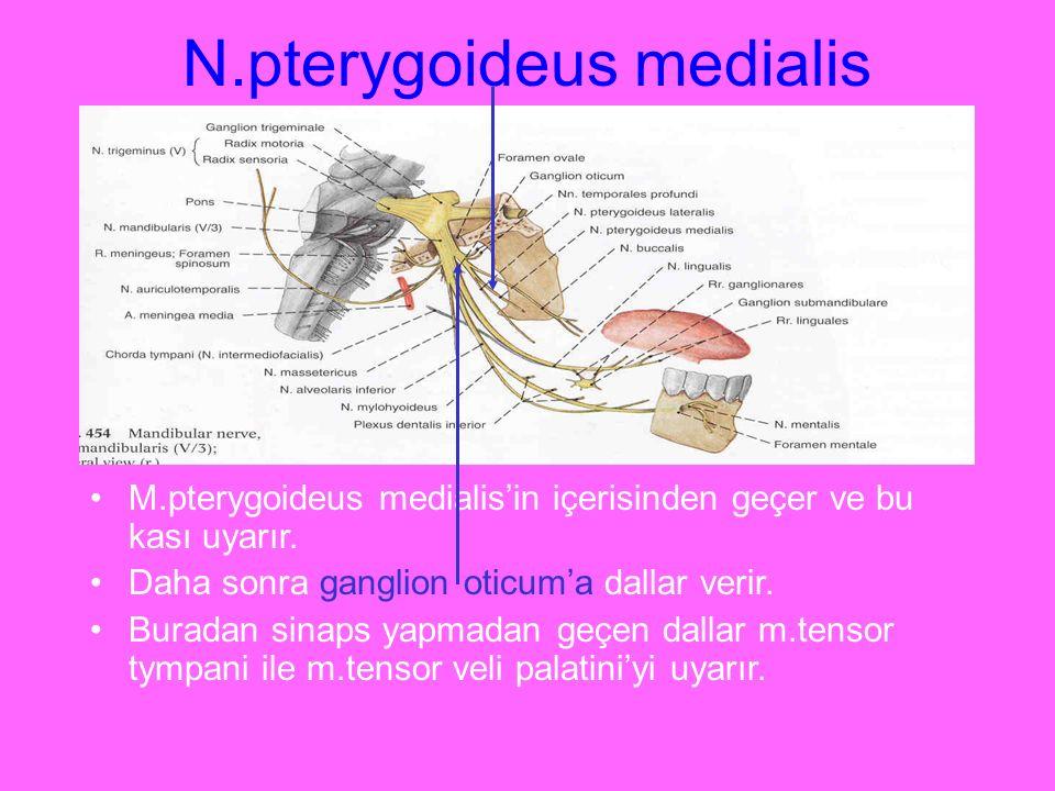 N.pterygoideus medialis M.pterygoideus medialis'in içerisinden geçer ve bu kası uyarır. Daha sonra ganglion oticum'a dallar verir. Buradan sinaps yapm