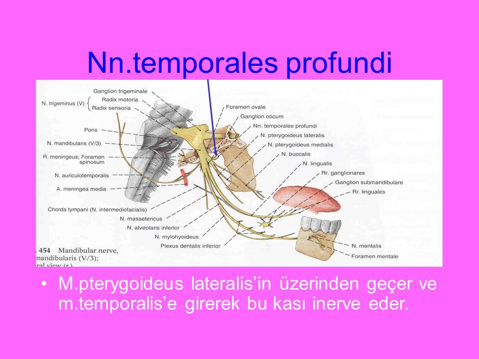 Nn.temporales profundi M.pterygoideus lateralis'in üzerinden geçer ve m.temporalis'e girerek bu kası inerve eder.