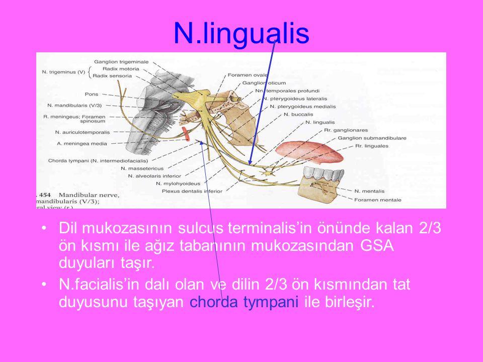 N.lingualis Dil mukozasının sulcus terminalis'in önünde kalan 2/3 ön kısmı ile ağız tabanının mukozasından GSA duyuları taşır. N.facialis'in dalı olan