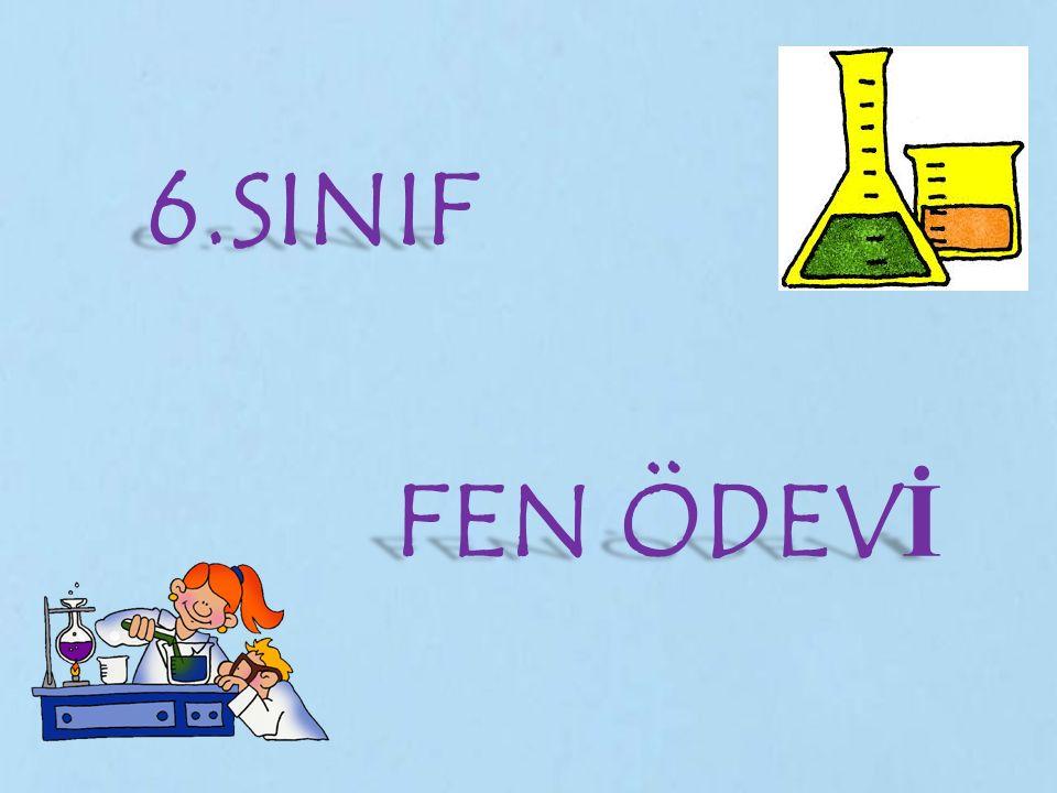 6.SINIF FEN ÖDEVİ
