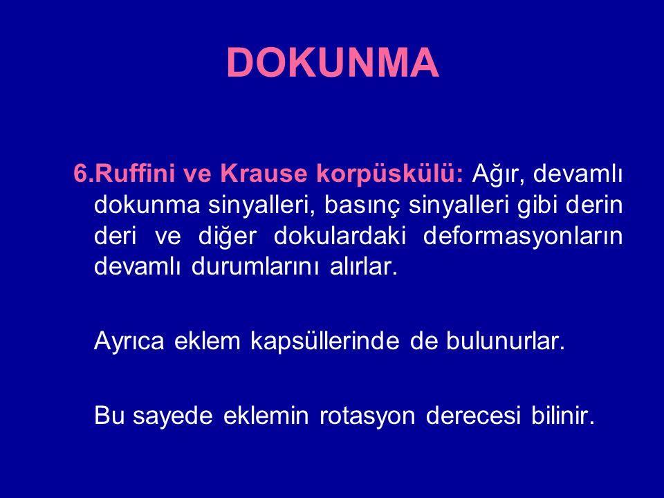 DOKUNMA 6.Ruffini ve Krause korpüskülü: Ağır, devamlı dokunma sinyalleri, basınç sinyalleri gibi derin deri ve diğer dokulardaki deformasyonların devamlı durumlarını alırlar.