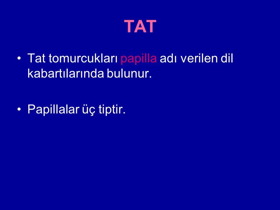TAT Tat tomurcukları papilla adı verilen dil kabartılarında bulunur. Papillalar üç tiptir.