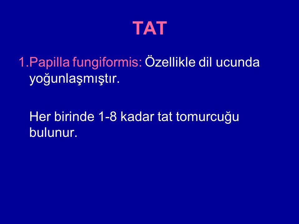 TAT 1.Papilla fungiformis: Özellikle dil ucunda yoğunlaşmıştır.