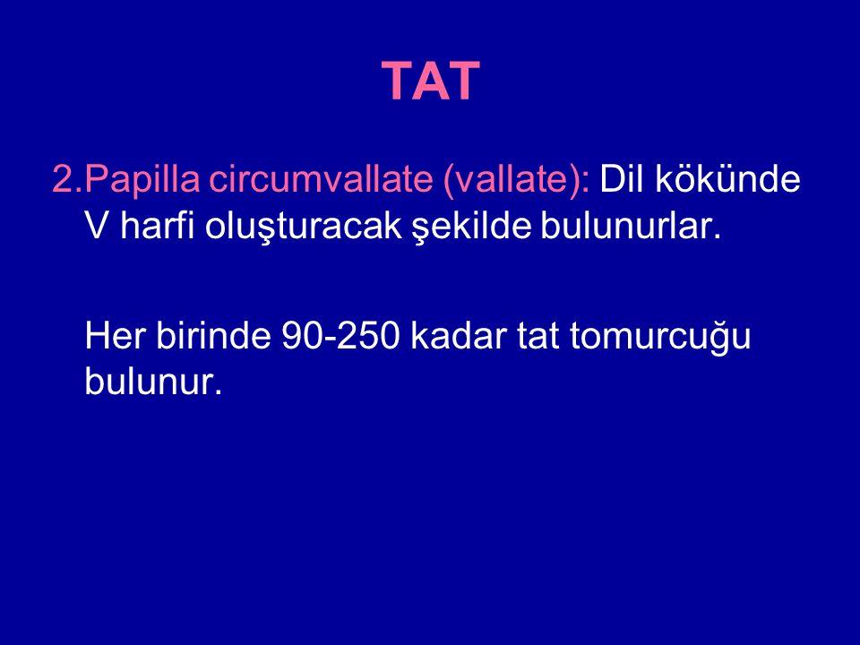 TAT 2.Papilla circumvallate (vallate): Dil kökünde V harfi oluşturacak şekilde bulunurlar.