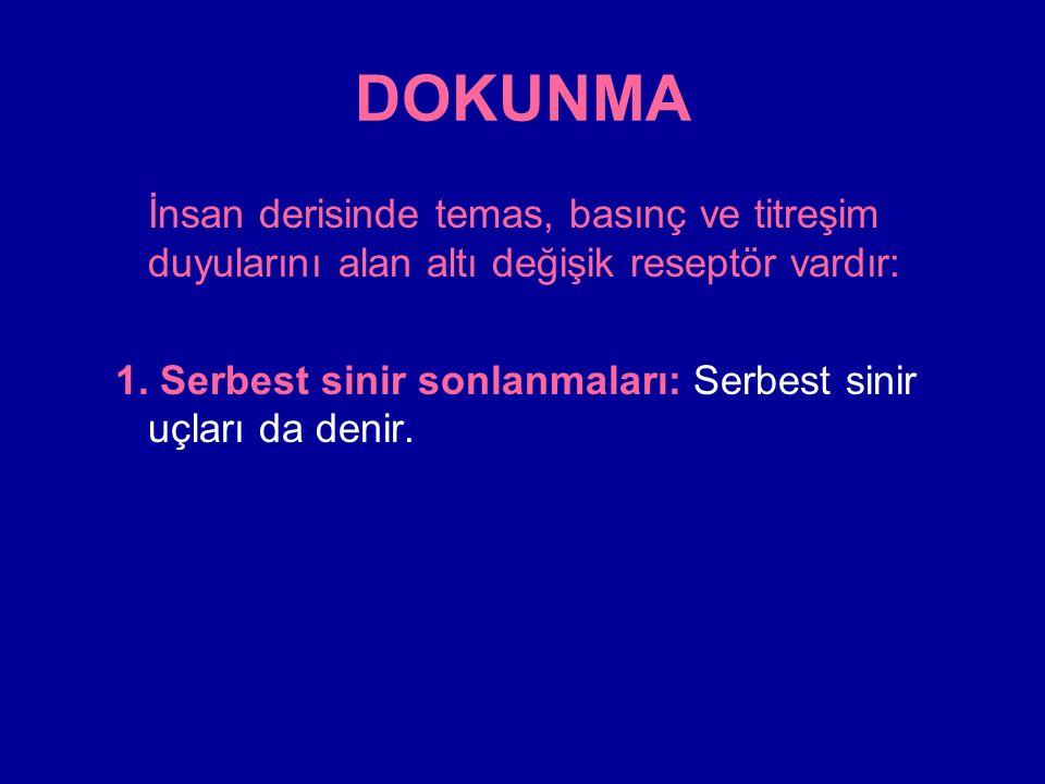 DOKUNMA Derinin her tarafında ve diğer bir çok yerlerde bulunan serbest sinir sonlanmaları dokunma ve basınca duyarlıdır.