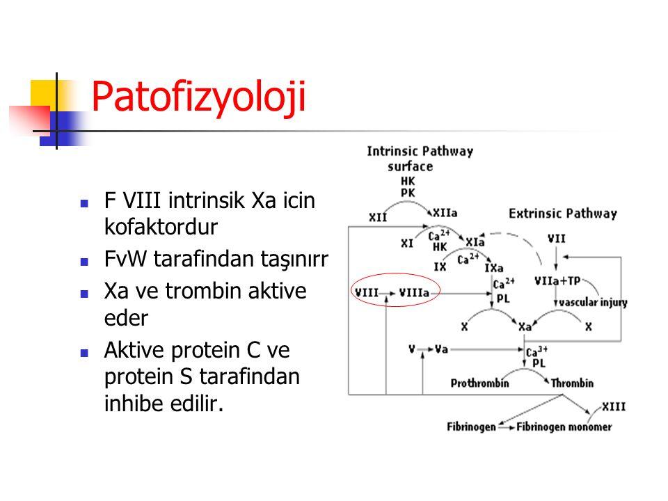 Patofizyoloji F VIII intrinsik Xa icin kofaktordur FvW tarafindan taşınırr Xa ve trombin aktive eder Aktive protein C ve protein S tarafindan inhibe edilir.