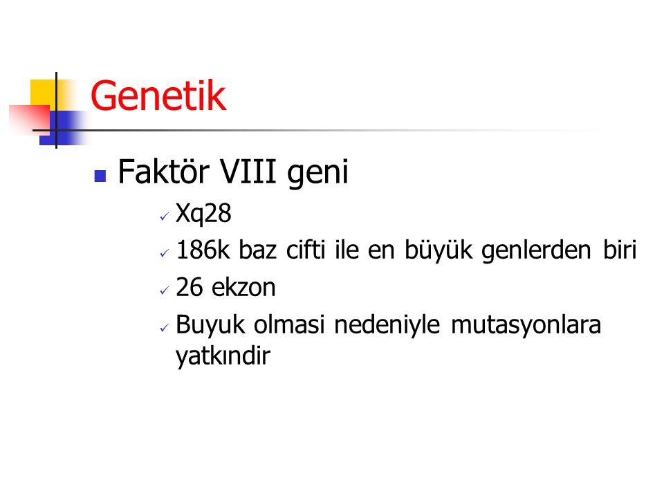 Genetik Faktör VIII geni Xq28 186k baz cifti ile en büyük genlerden biri 26 ekzon Buyuk olmasi nedeniyle mutasyonlara yatkındir
