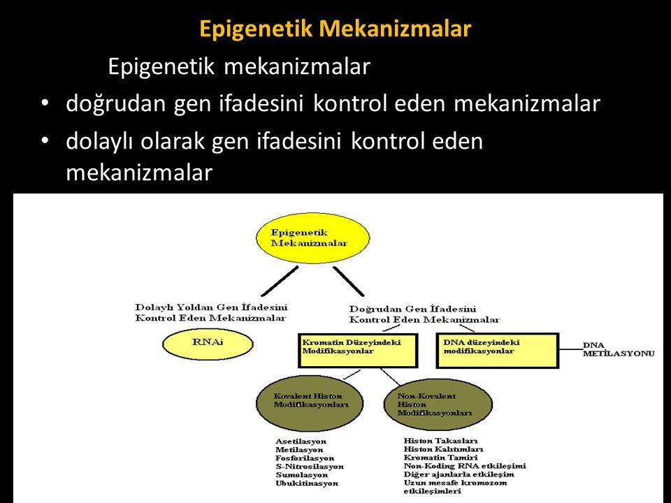 Epigenetik Mekanizmalar Epigenetik mekanizmalar doğrudan gen ifadesini kontrol eden mekanizmalar dolaylı olarak gen ifadesini kontrol eden mekanizmala