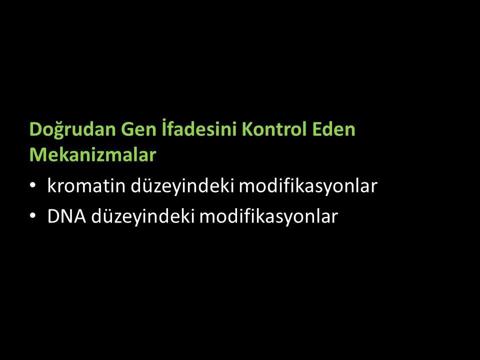 Doğrudan Gen İfadesini Kontrol Eden Mekanizmalar kromatin düzeyindeki modifikasyonlar DNA düzeyindeki modifikasyonlar