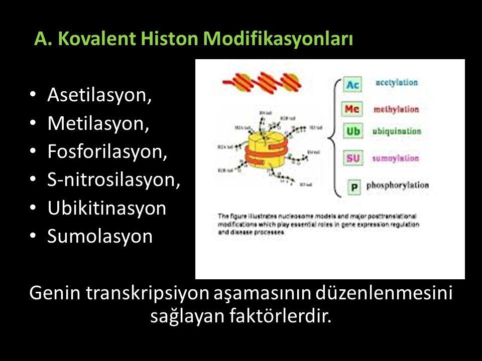 A. Kovalent Histon Modifikasyonları Asetilasyon, Metilasyon, Fosforilasyon, S-nitrosilasyon, Ubikitinasyon Sumolasyon Genin transkripsiyon aşamasının