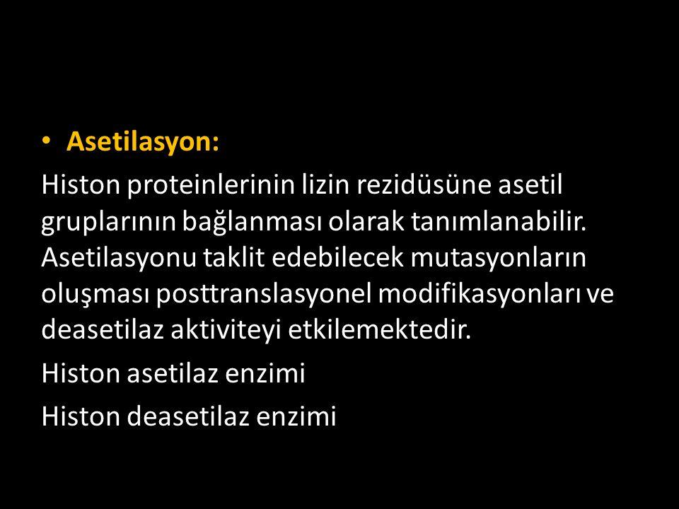 Asetilasyon: Histon proteinlerinin lizin rezidüsüne asetil gruplarının bağlanması olarak tanımlanabilir. Asetilasyonu taklit edebilecek mutasyonların