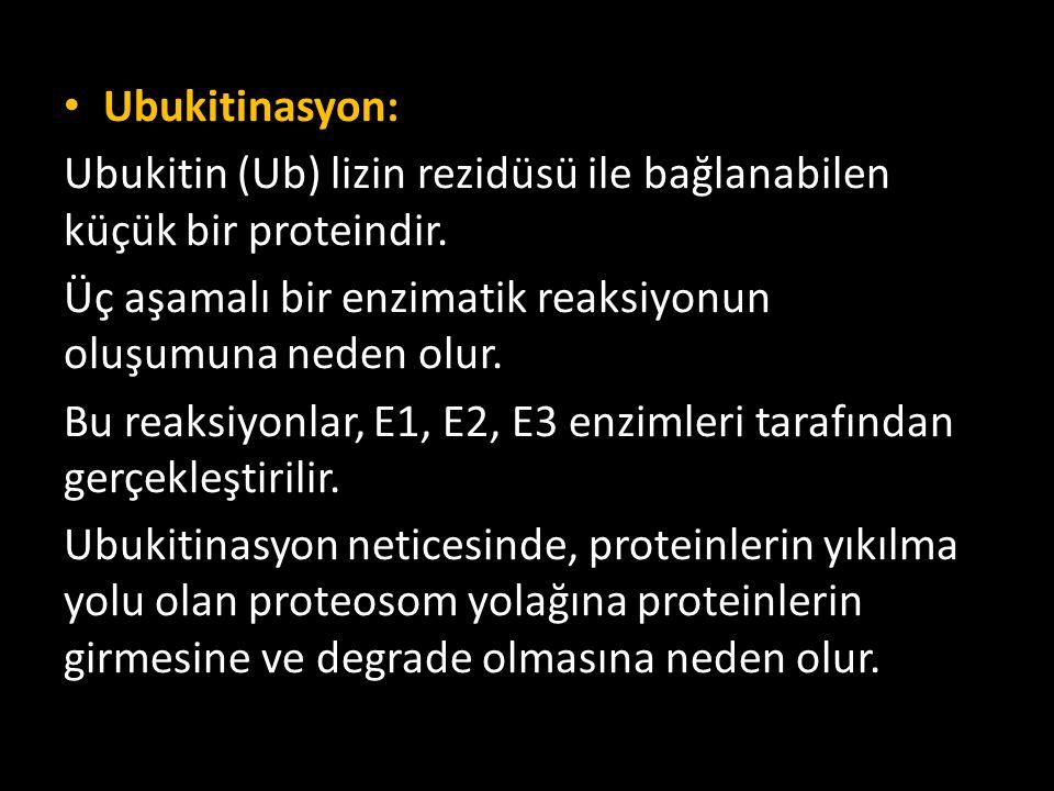 Ubukitinasyon: Ubukitin (Ub) lizin rezidüsü ile bağlanabilen küçük bir proteindir. Üç aşamalı bir enzimatik reaksiyonun oluşumuna neden olur. Bu reaks