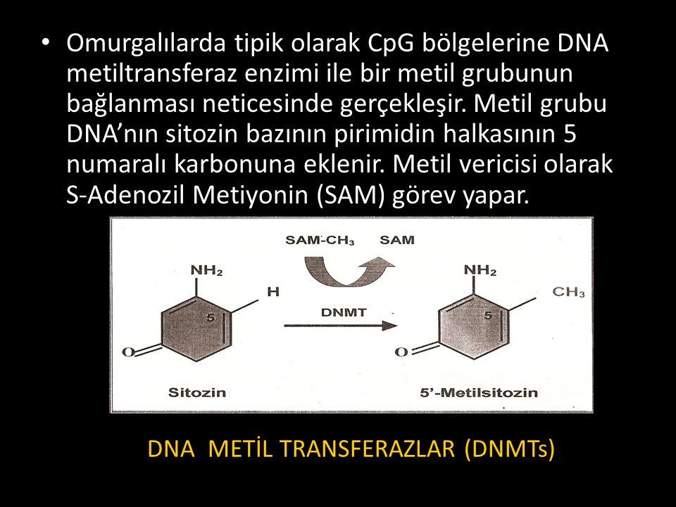 Omurgalılarda tipik olarak CpG bölgelerine DNA metiltransferaz enzimi ile bir metil grubunun bağlanması neticesinde gerçekleşir. Metil grubu DNA'nın s
