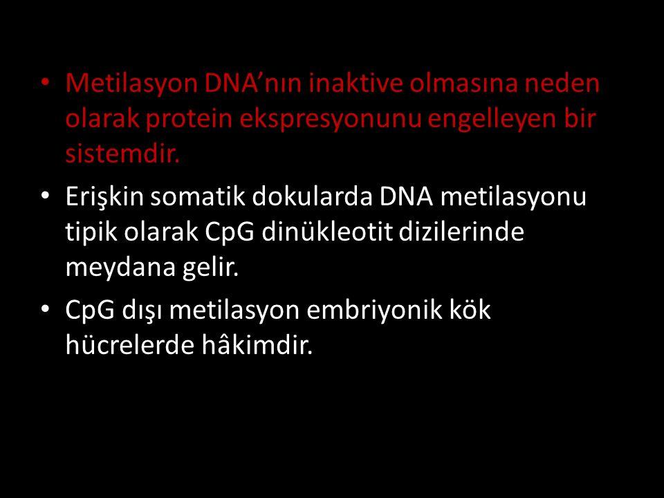 Metilasyon DNA'nın inaktive olmasına neden olarak protein ekspresyonunu engelleyen bir sistemdir. Erişkin somatik dokularda DNA metilasyonu tipik olar