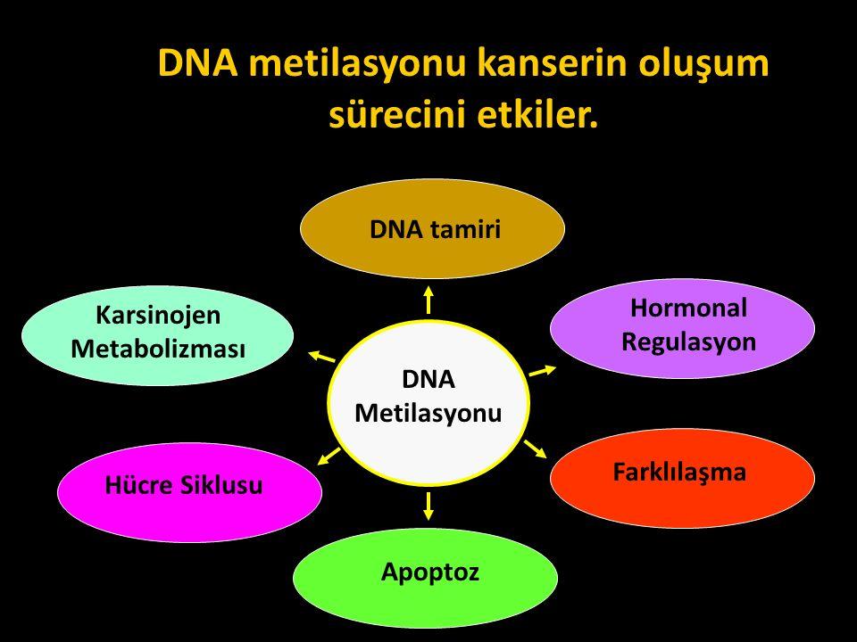 DNA metilasyonu kanserin oluşum sürecini etkiler. DNA tamiri Hormonal Regulasyon Karsinojen Metabolizması Apoptoz Farklılaşma Hücre Siklusu DNA Metila