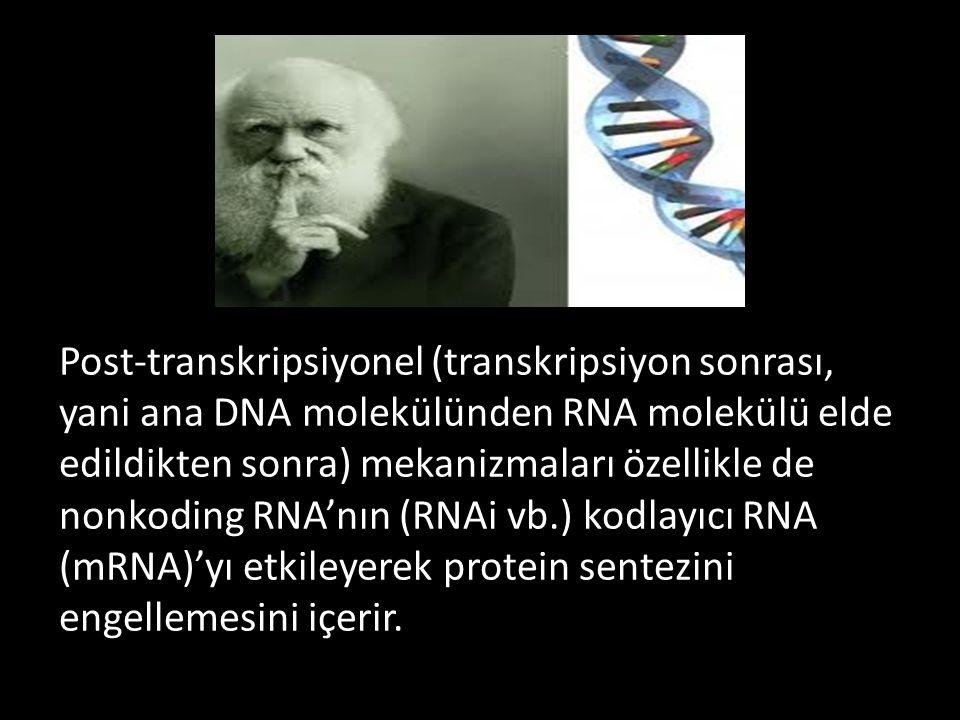 Post-transkripsiyonel (transkripsiyon sonrası, yani ana DNA molekülünden RNA molekülü elde edildikten sonra) mekanizmaları özellikle de nonkoding RNA'