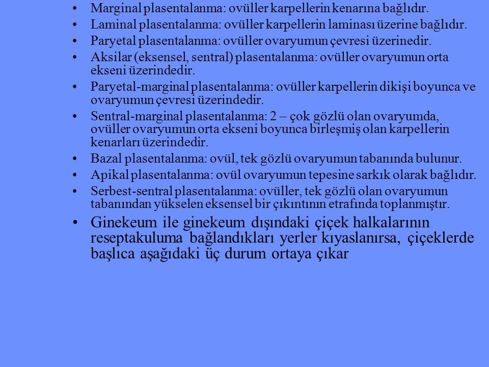 Marginal plasentalanma: ovüller karpellerin kenarına bağlıdır. Laminal plasentalanma: ovüller karpellerin laminası üzerine bağlıdır. Paryetal plasenta