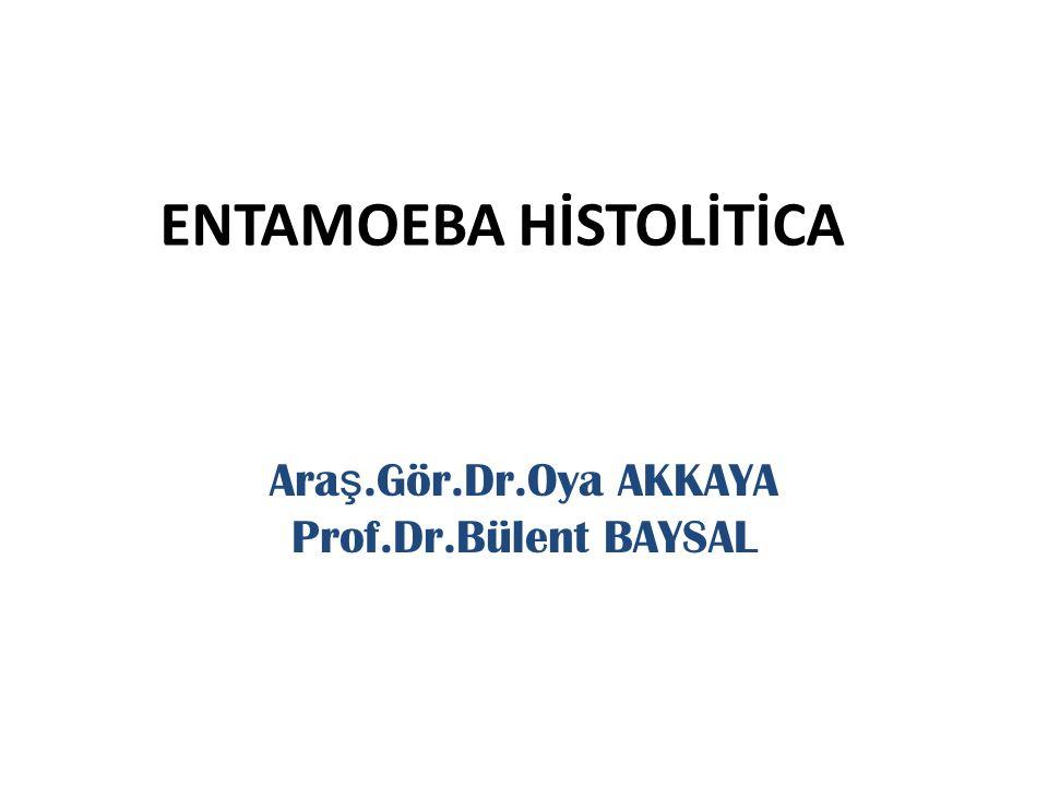 ENTAMOEBA HİSTOLİTİCA Ara ş.Gör.Dr.Oya AKKAYA Prof.Dr.Bülent BAYSAL