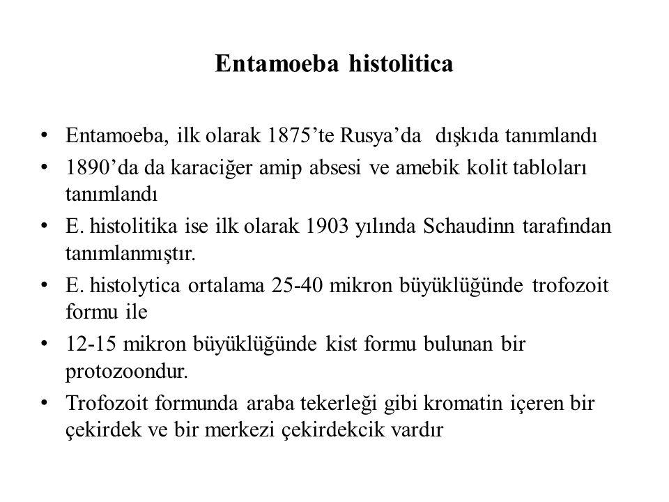 Endemik bölgelerde insanlar birçok zaman E.histolitika ile karşılaşır.
