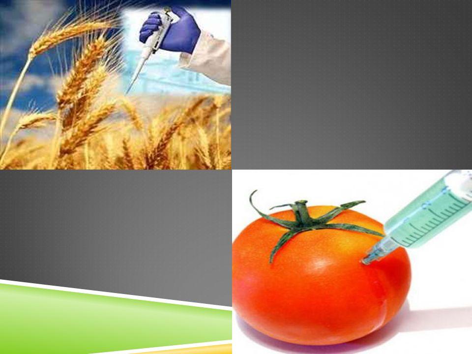 YEDİNCİ BÖLÜM ÇEŞITLI VE SON HÜKÜMLER Yürürlükten kaldırılan yönetmelik MADDE 24 – (1) 26/10/2009 tarihli ve 27388 sayılı Resmî Gazete'de yayımlanan Gıda ve Yem Amaçlı Genetik Yapısı Değiştirilmiş Organizmalar ve Ürünlerinin İthalatı, İşlenmesi, İhracatı, Kontrol ve Denetimine Dair Yönetmelik yürürlükten kaldırılmıştır.
