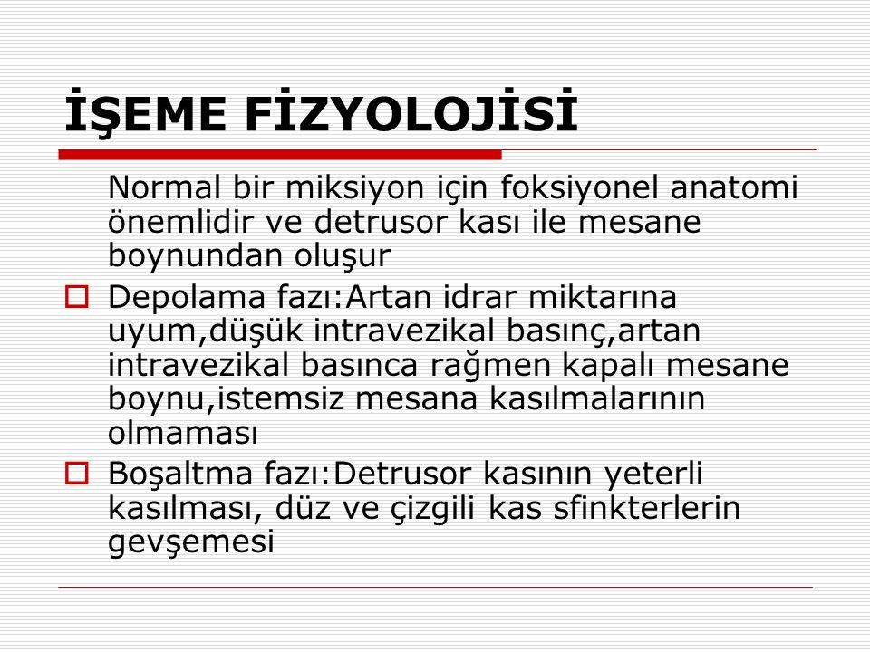 ÜRETRA ANATOMİSİ