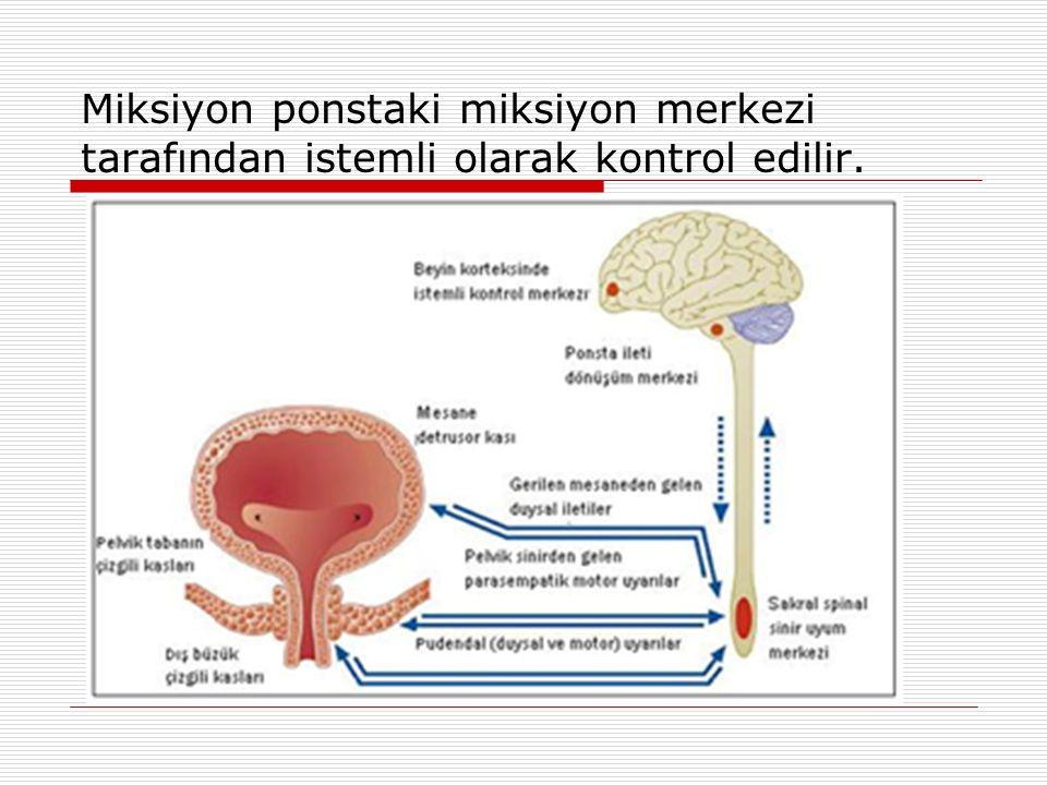 Miksiyon refleksi için sempatik, parasempatik ve somatik sinirlerin modulasyonu ve integrasyonu gereklidir.