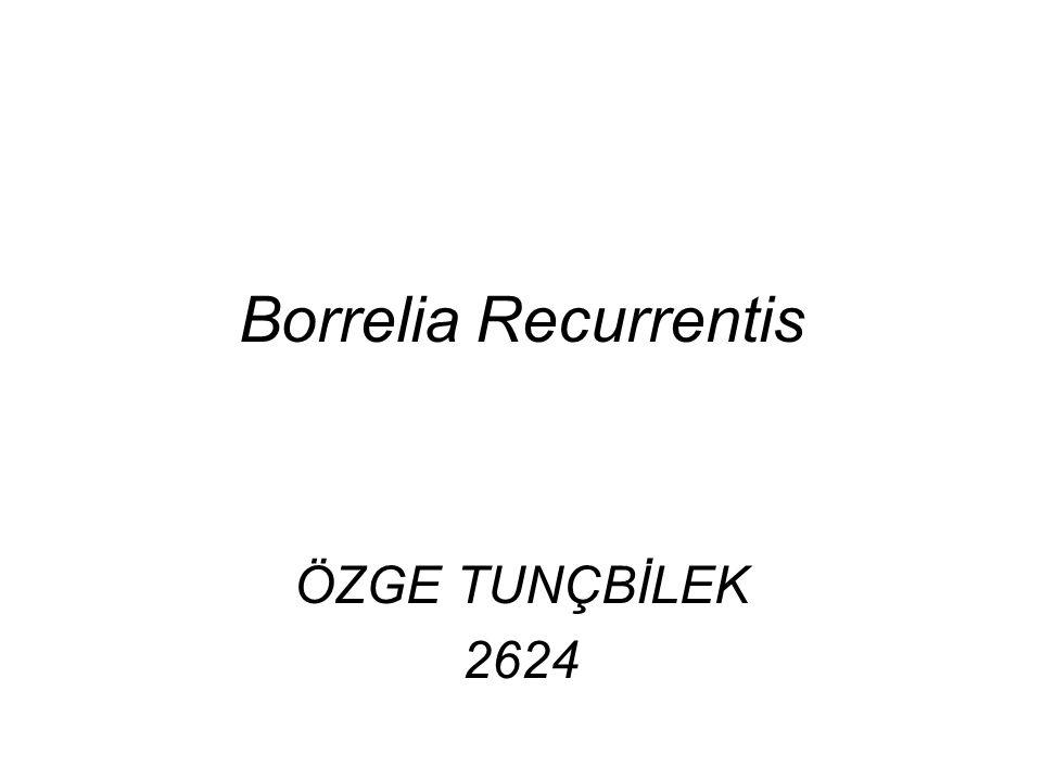 Borrelia Recurrentis ÖZGE TUNÇBİLEK 2624
