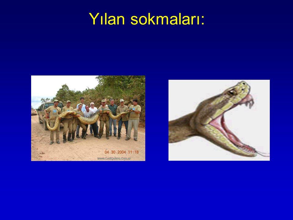 Yılan sokmaları: