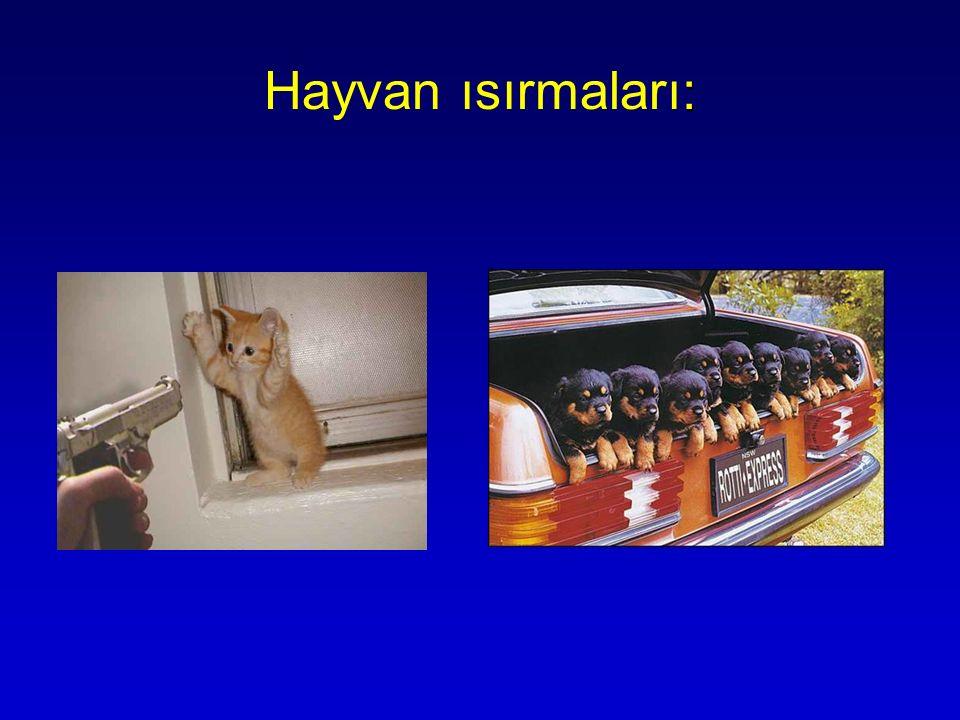 : Hayvan ısırmaları:
