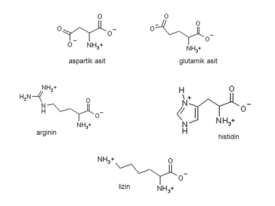 arginin lizin histidin aspartik asitglutamik asit