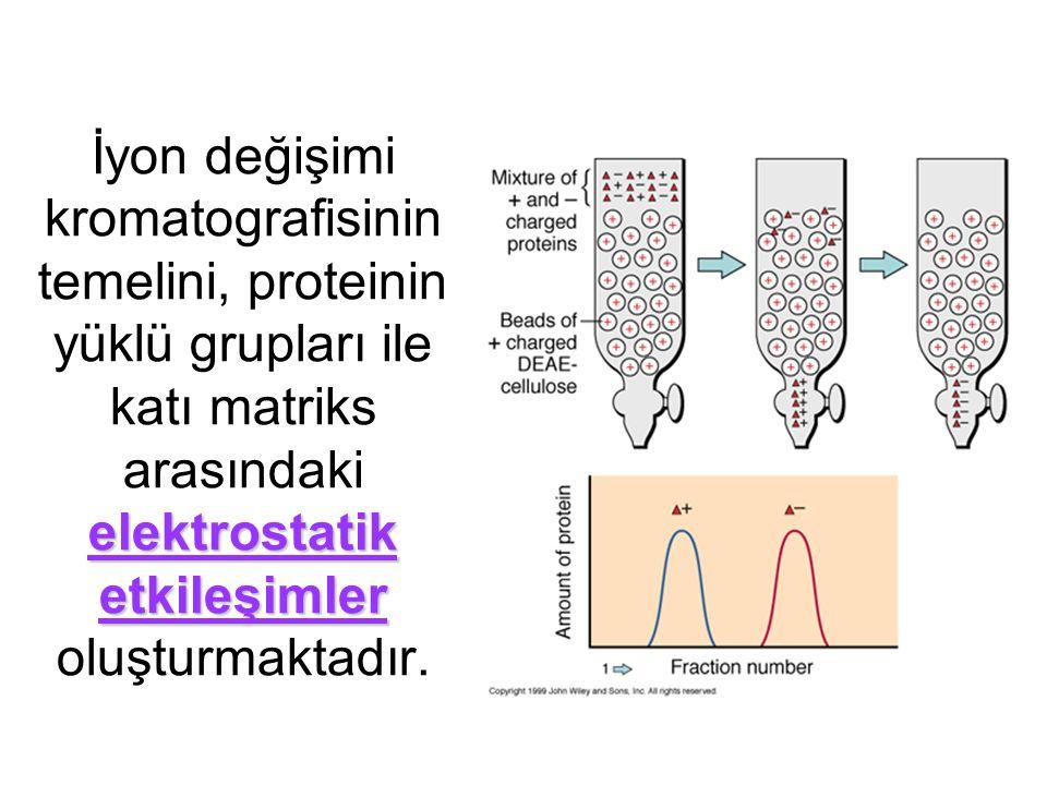 elektrostatik etkileşimler İyon değişimi kromatografisinin temelini, proteinin yüklü grupları ile katı matriks arasındaki elektrostatik etkileşimler oluşturmaktadır.