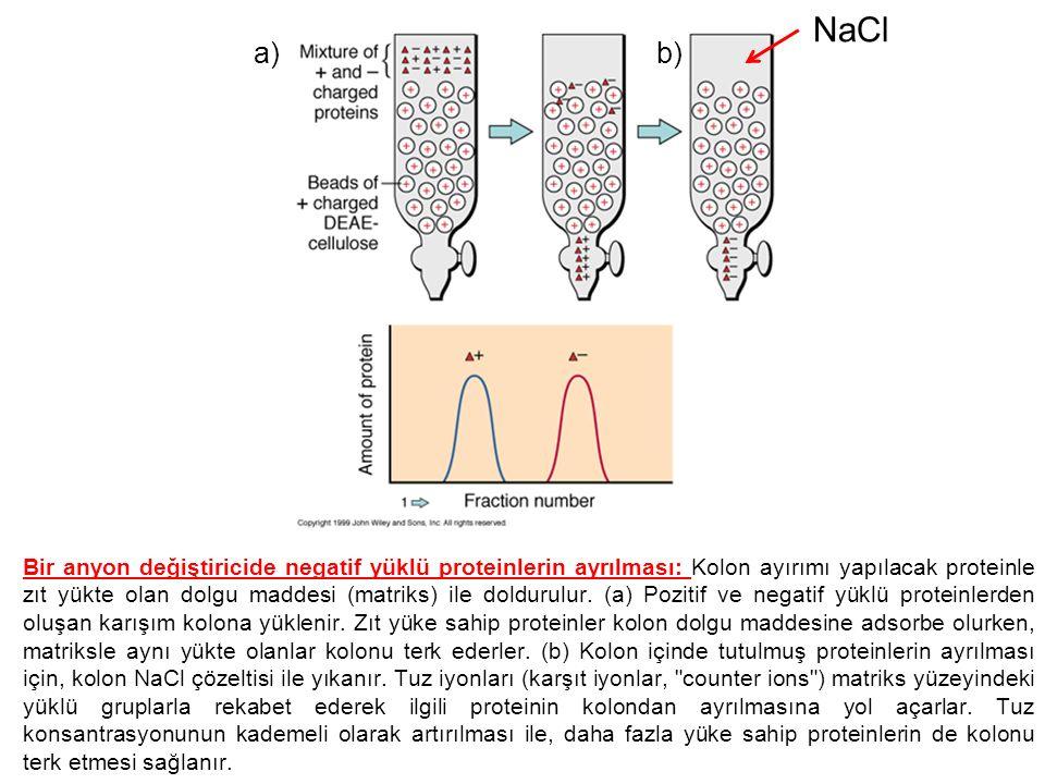 Bir anyon değiştiricide negatif yüklü proteinlerin ayrılması: Kolon ayırımı yapılacak proteinle zıt yükte olan dolgu maddesi (matriks) ile doldurulur.
