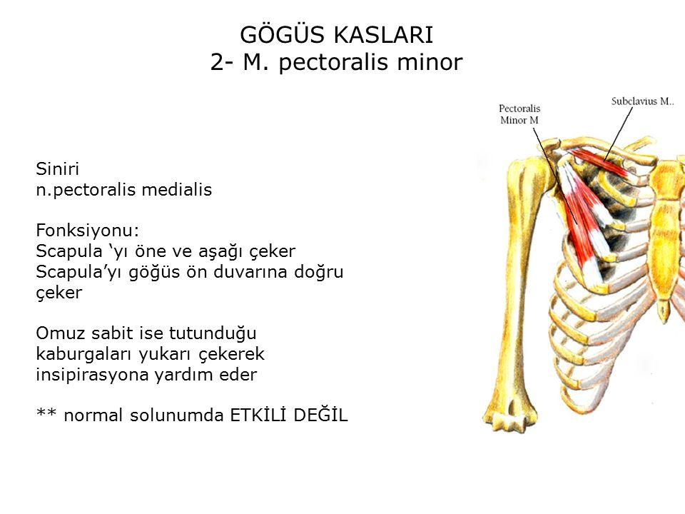 GÖGÜS KASLARI 2- M.