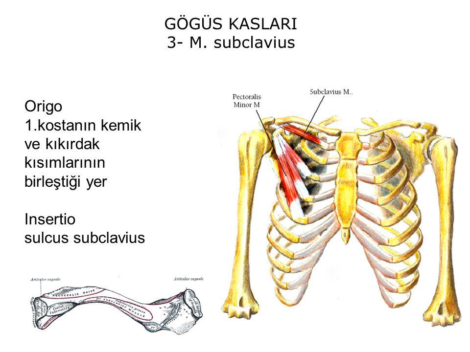 GÖGÜS KASLARI 3- M.